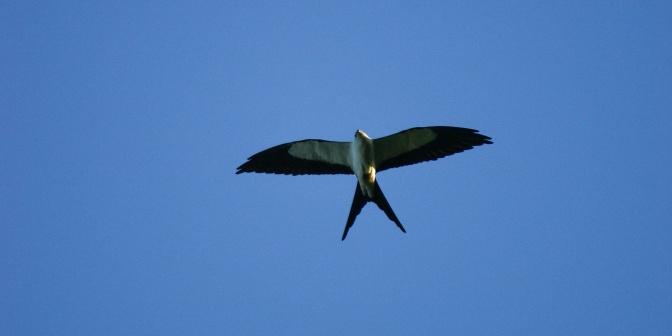 Kites in Flight