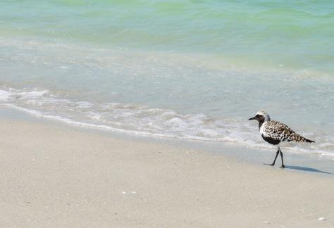 Bowman's Beach Bird