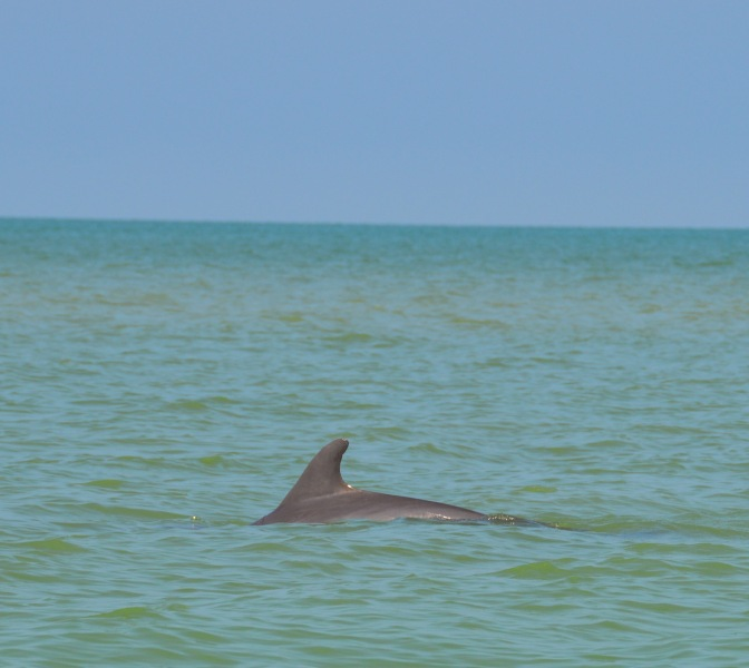Scenes from a Sanibel Beach