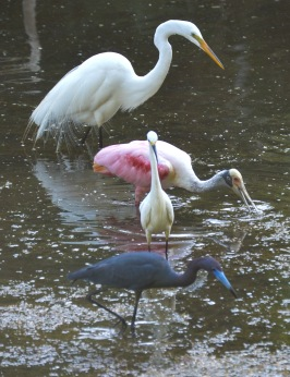 ff 4 birds