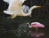 ff bird flying