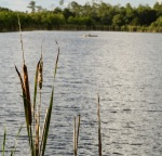 Gator Lake at the Six Mile Cypress Slough Preserve in Fort Myers.
