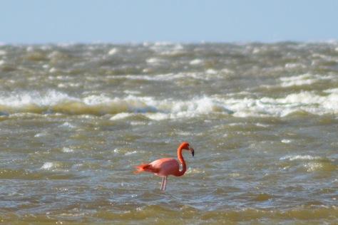 Flamingo 2