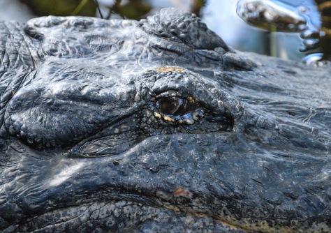 Slu Gator 3